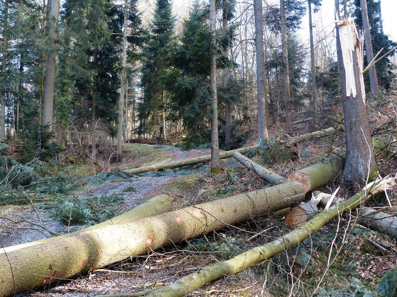 Hexenwald-Trailpark gesperrt